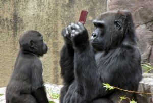 Gorilla plays with Nintendo DS accidentally dropped into its enclosure, San Franciso Zoo, America - 06 Aug 2010